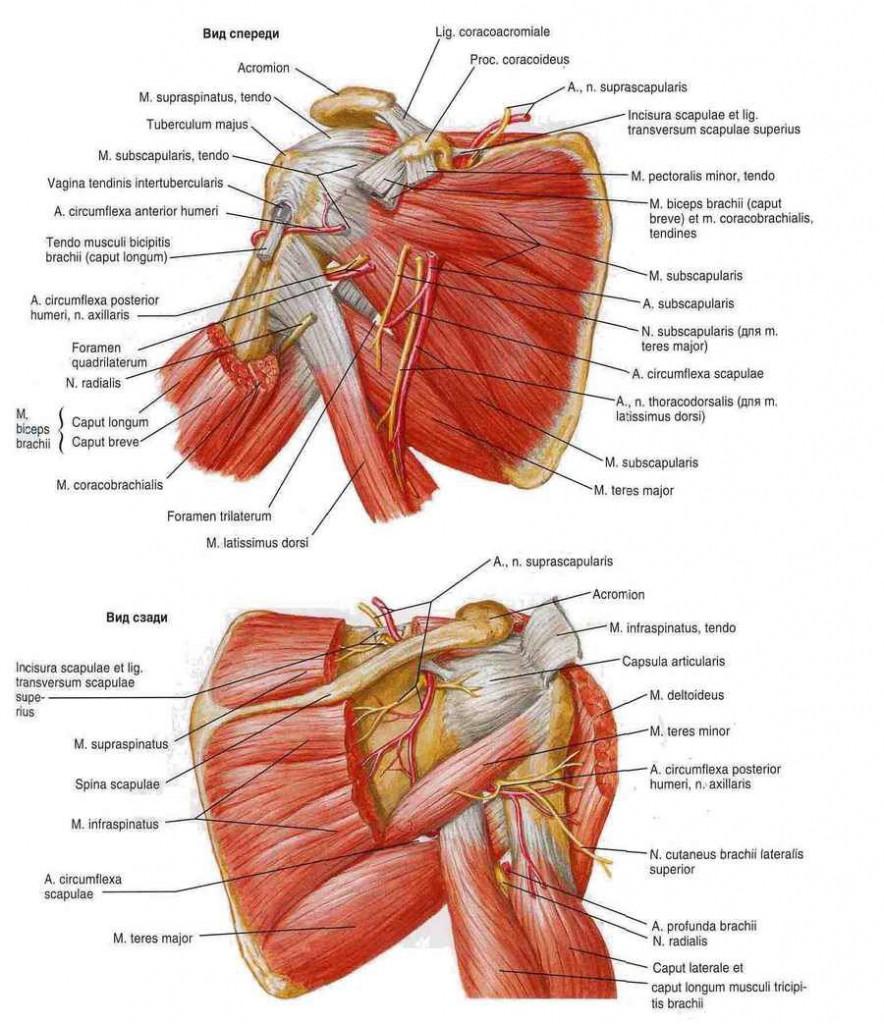 a könyökízület kötőelemeinek epikondilitisz gyulladása