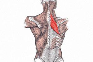 a clavicularis ízület szegycsontjának betegségei