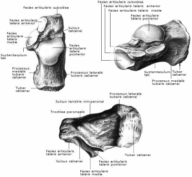 kalcaneo-köbös ízületi kezelés)